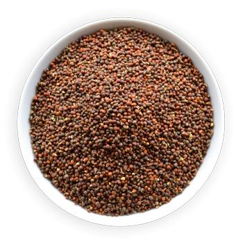 BROKOLICA semien 500 g Kelu