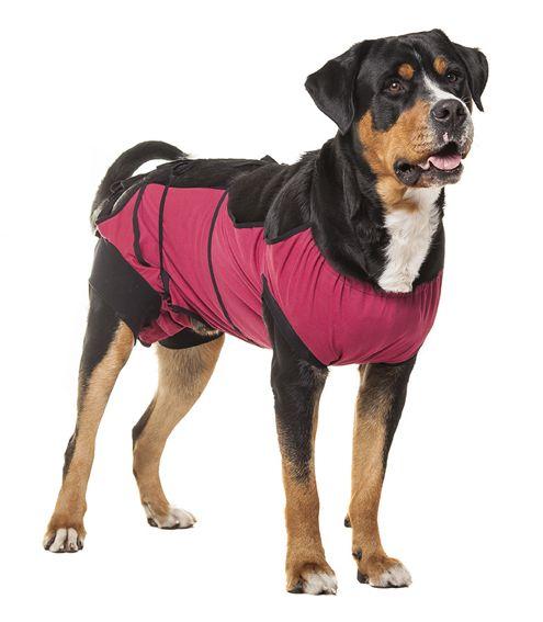 Ubranko pooperacyjne dla psa SAMCA rozmiar M