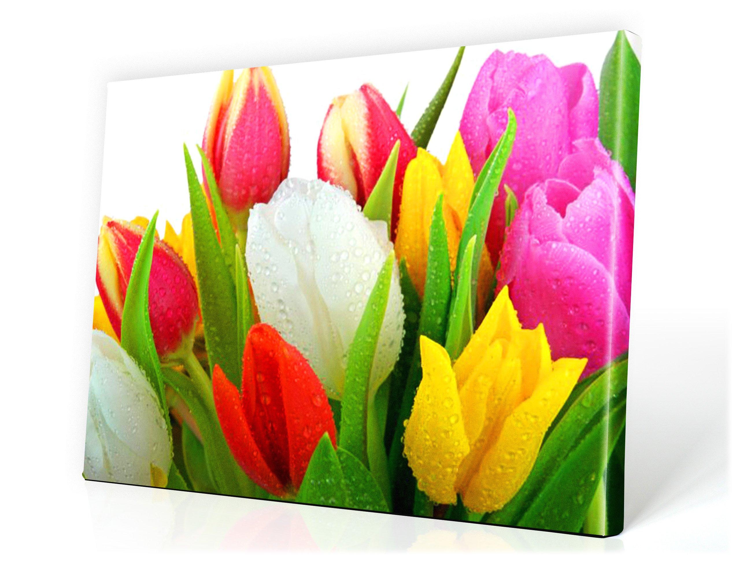 Obrázok 80x60cm Flowers Tulips Spa Obrázky