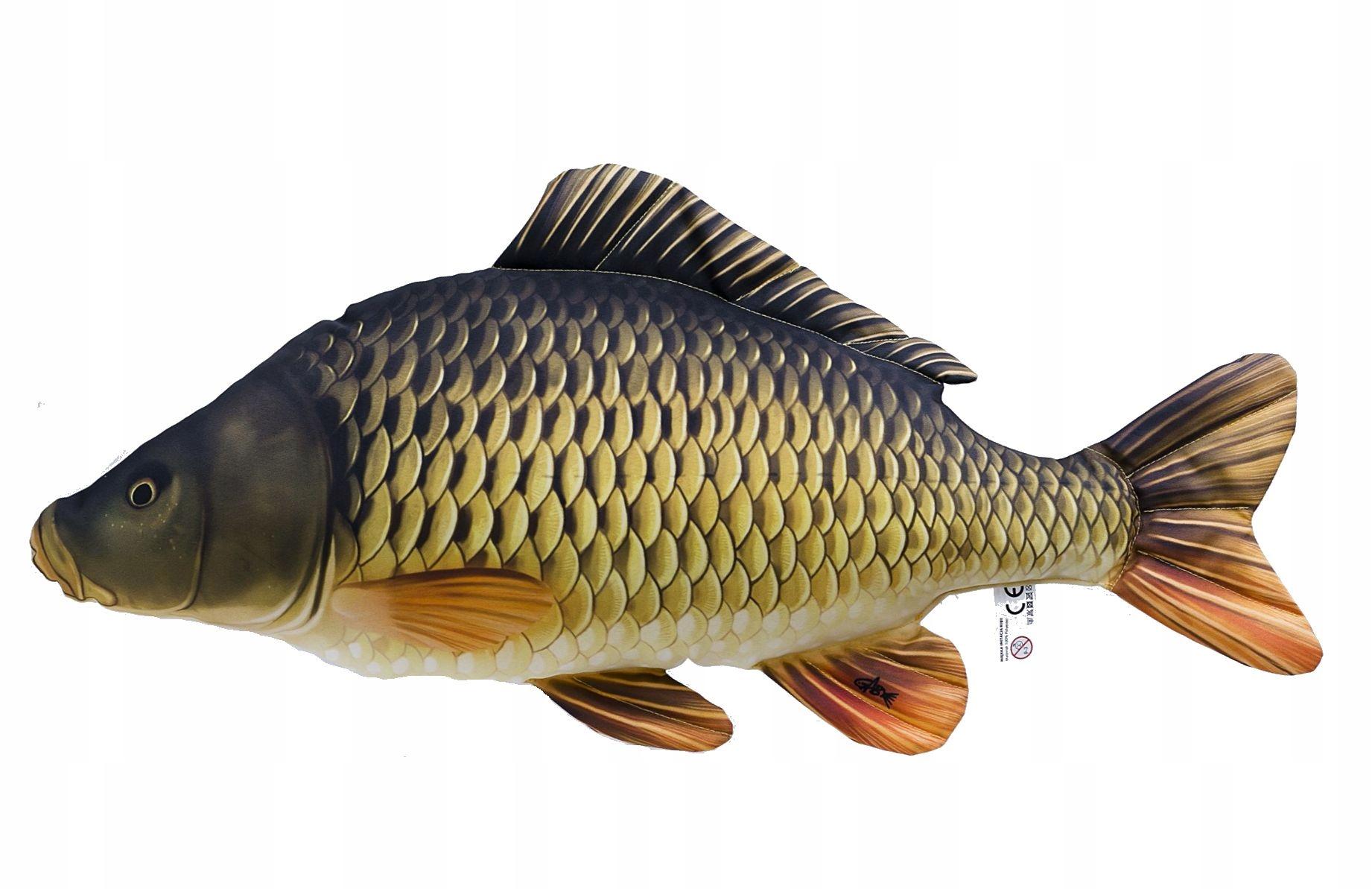 Прикольные поздравления с днем рождения рыбе вентильном