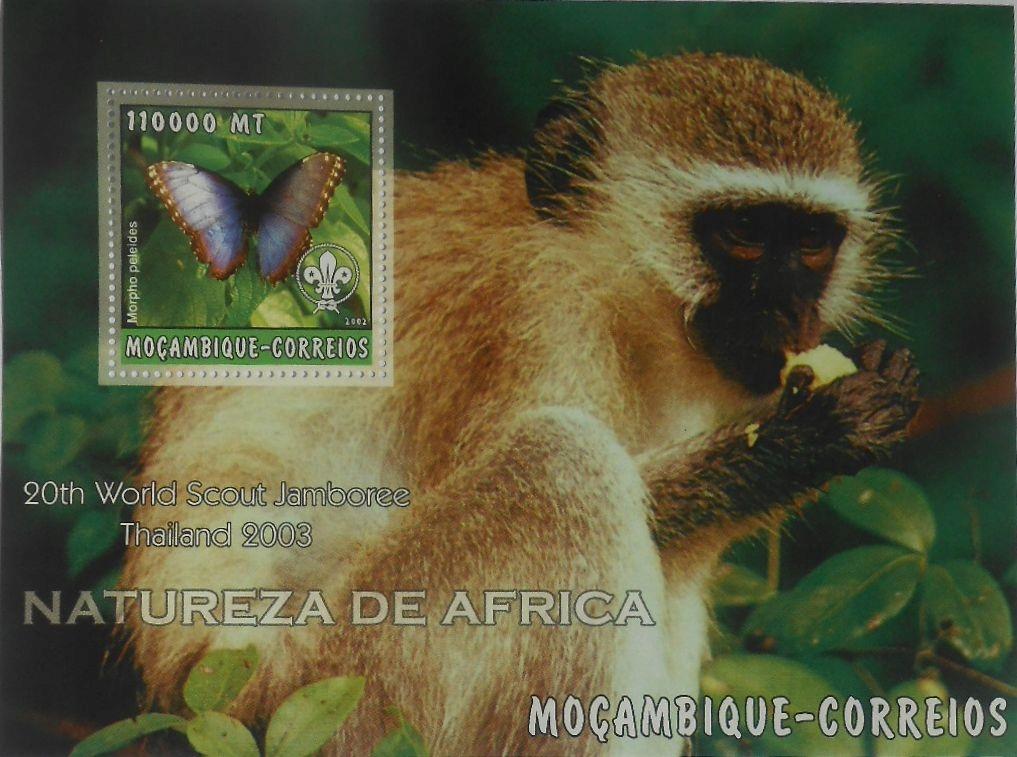 Scouting Scout Scout Jambore Mozambik MOZ2266