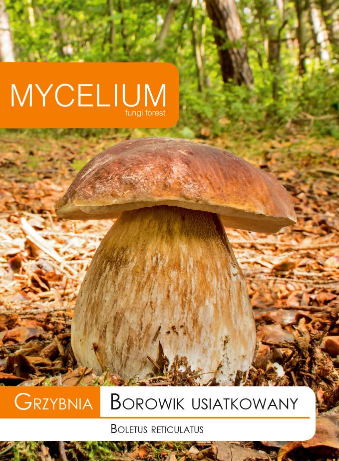 ГРИБНЫЙ БОРОВИК, ИСТИННЫЕ лесные грибы + БЕСПЛАТНО