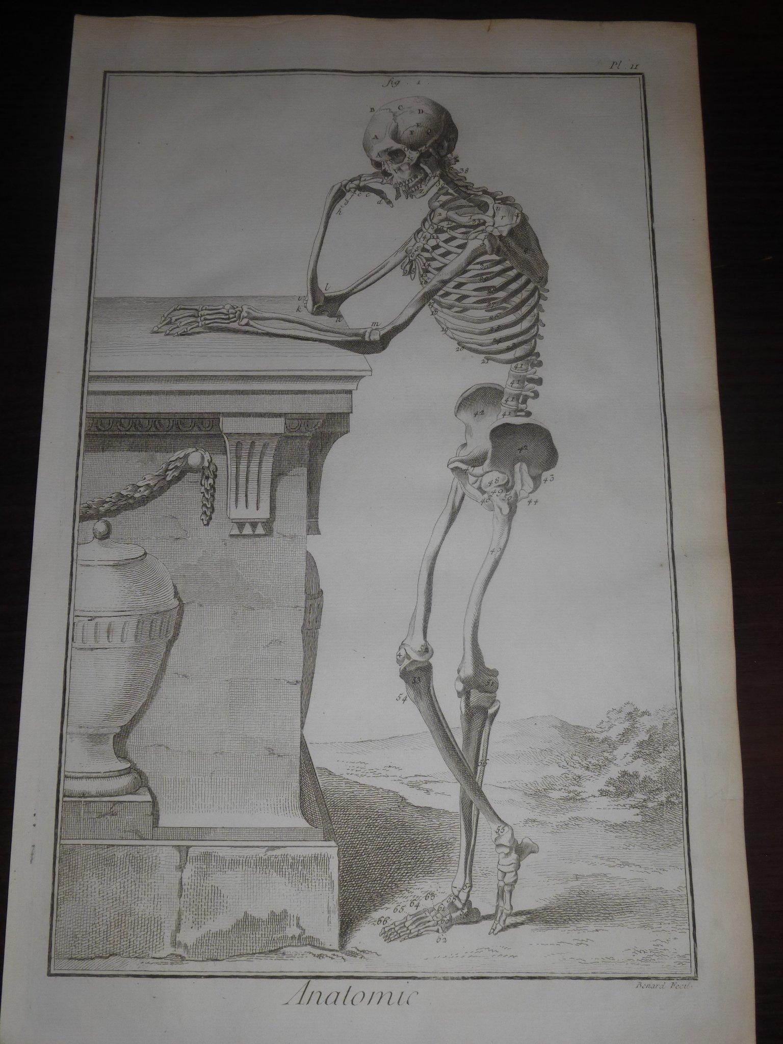 Encyklopedia Diderot Anatomia 33 Plansze 1762