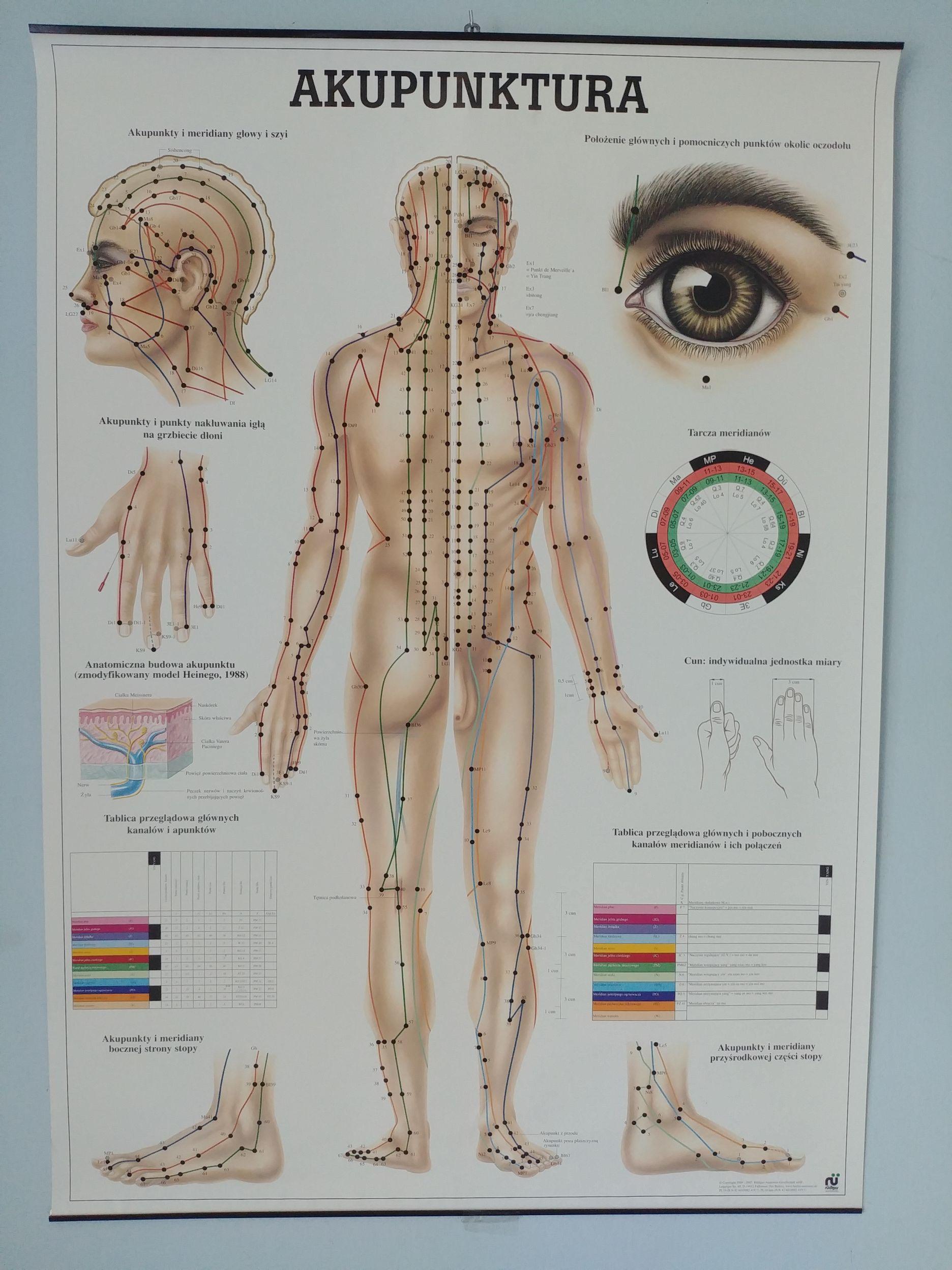 Plakat Akupunktura Tablica Plansza Lurgus 7316312347