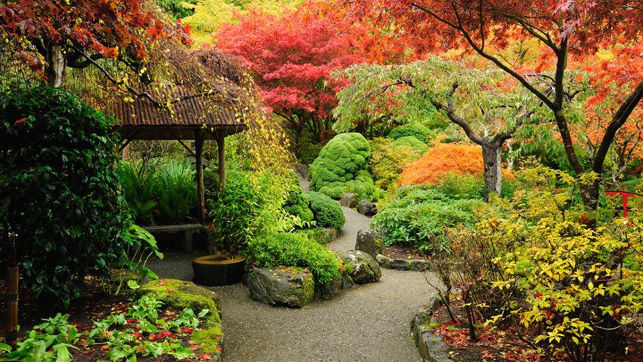 Japonski Ogrod Jakie Rosliny Jak Urzadzic Na Co Zwrocic Uwage Allegro Pl