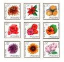 Fi 1548 - 1556 ** садовые Цветы доставка товаров из Польши и Allegro на русском