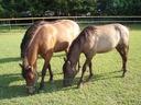 pensjonat dla koni 20km od krakowa