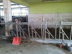 Rebrík pre hovädzie dobytok