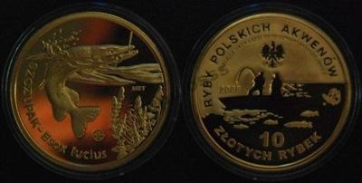 10 Złotych Rybek - SZCZUPAK - OKAZJA !